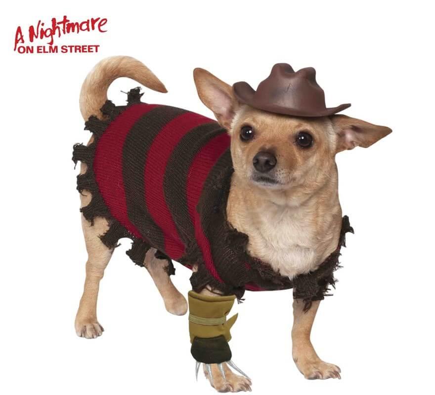 Disfraz Freddy de Pesadilla en Elm Street para perro