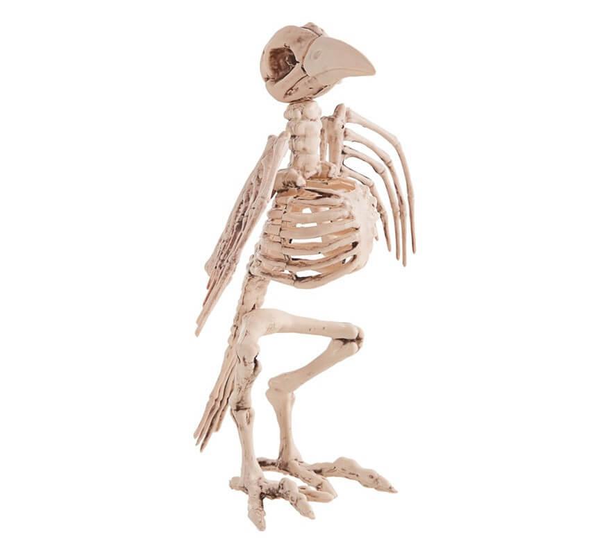 Esqueleto de Ave mide 21X30 cm