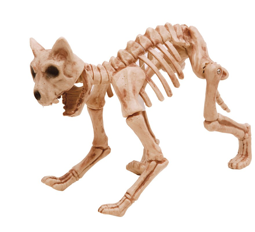Esqueleto de Gato Terrorífico