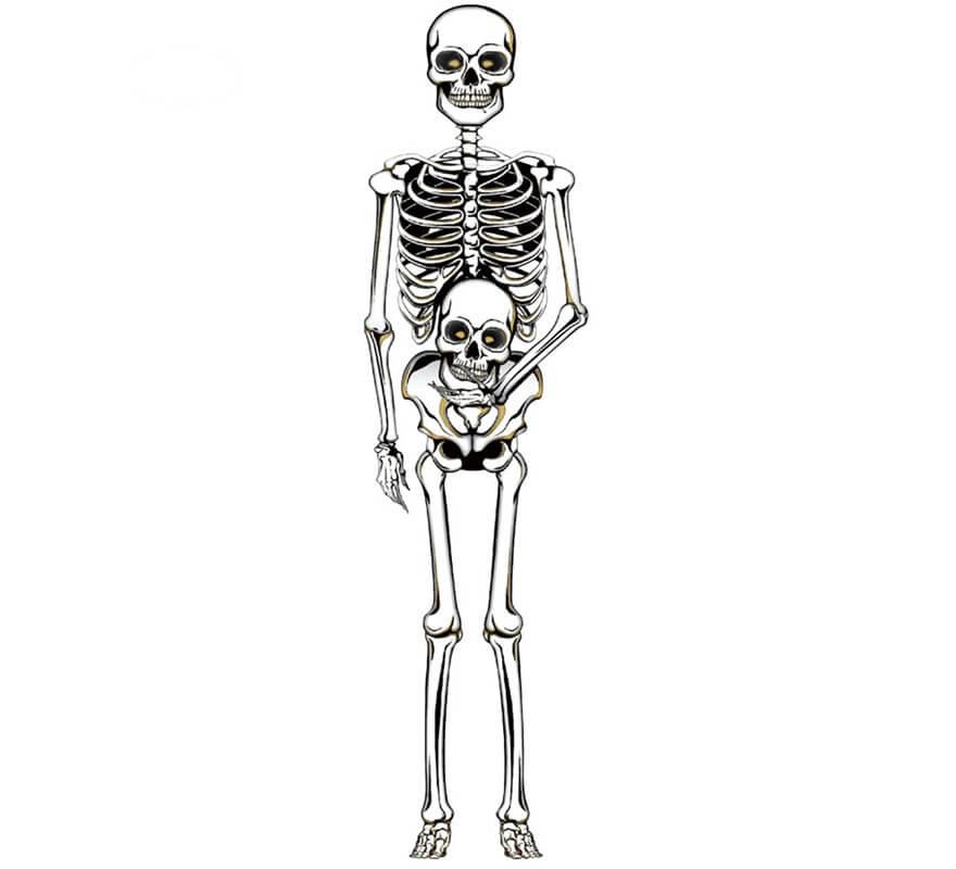 Esqueleto de Pared 150 Cm