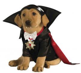 Disfraz Drácula para perro
