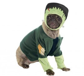 Disfraz Frankenstein para perro