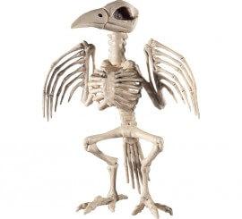 Esqueleto de cuervo 21x20x30cm