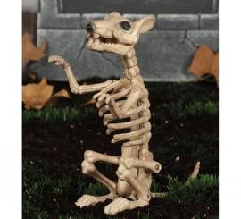 Esqueleto de Rata 24 Cm