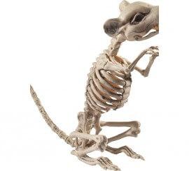 Esqueleto de Rata 9x28x33cm