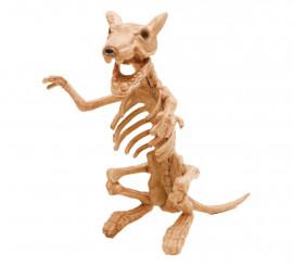 Esqueleto de Rata 20 x 47 x 17 cm