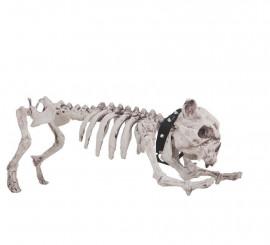 Esqueleto de Perro de 60 cm
